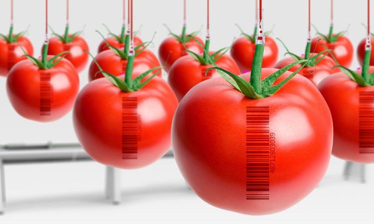 Photo of The Myth of PLU Codes and GMO Foods