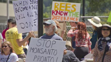 Photo of 8 Reasons Why Every Human Being With a Conscience Should Boycott Monsanto-Bayer