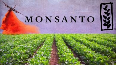 """Photo of Hillary Clinton Backs Monsanto: Claims that """"To Be Anti-Monsanto"""" Is to Be """"Pro Global-Warming"""""""