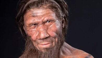 Photo of Researchers To Grow Mini Neanderthal Brains In A Lab