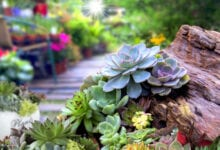 Photo of 5 Most Unusual Succulent You Can Plant in Your Garden in 2020